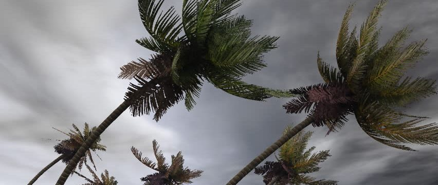 The Wisdom of a palm tree